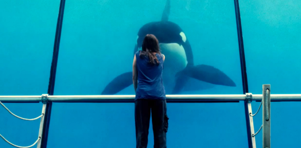 Rust and Bone Jacques Audiard