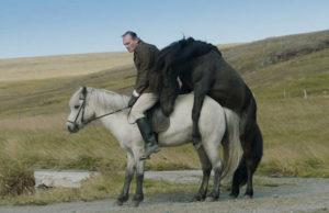 Of Horses and Men Benedikt Erlingsson Review