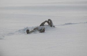 Larry Fessenden The Last Winter
